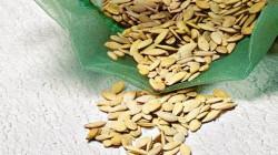 ogorod-semena