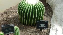 Выращивание кактусов