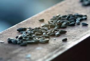 Бизнес по производству и продаже жареных семечек