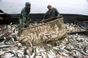 dobycha-ryby