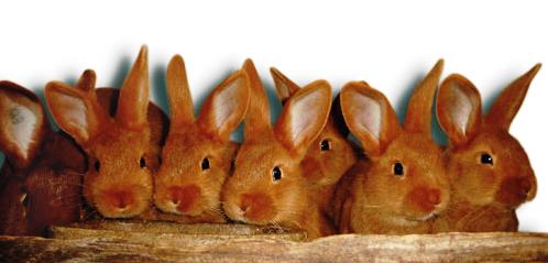 Выгодно ли разводить кроликов на мясо