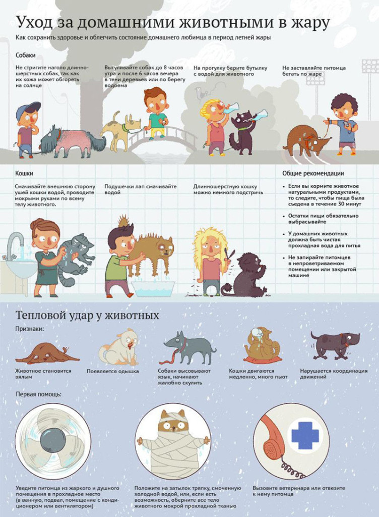 Уход за домашними животными как заработок