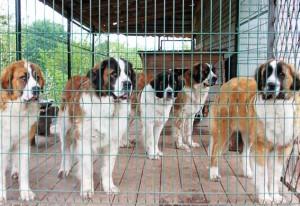 Бизнес на элитных породах собак видео