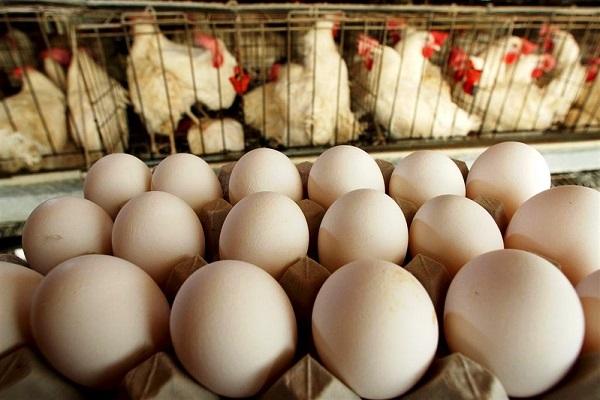 продажа яиц