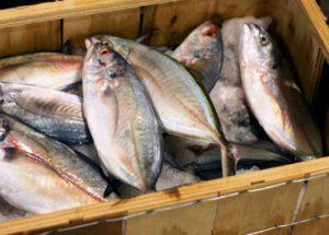 Бизнес план вяленая рыба новая идея для малого бизнеса